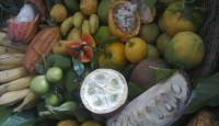 I vegani-fruttariani  sono più evoluti e moderni ?